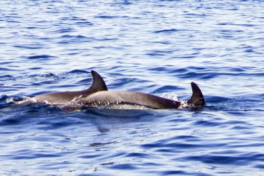 Delfini nella baia di Masca